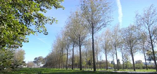 parc aux angéliques