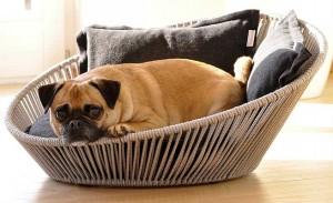 corbeille chien